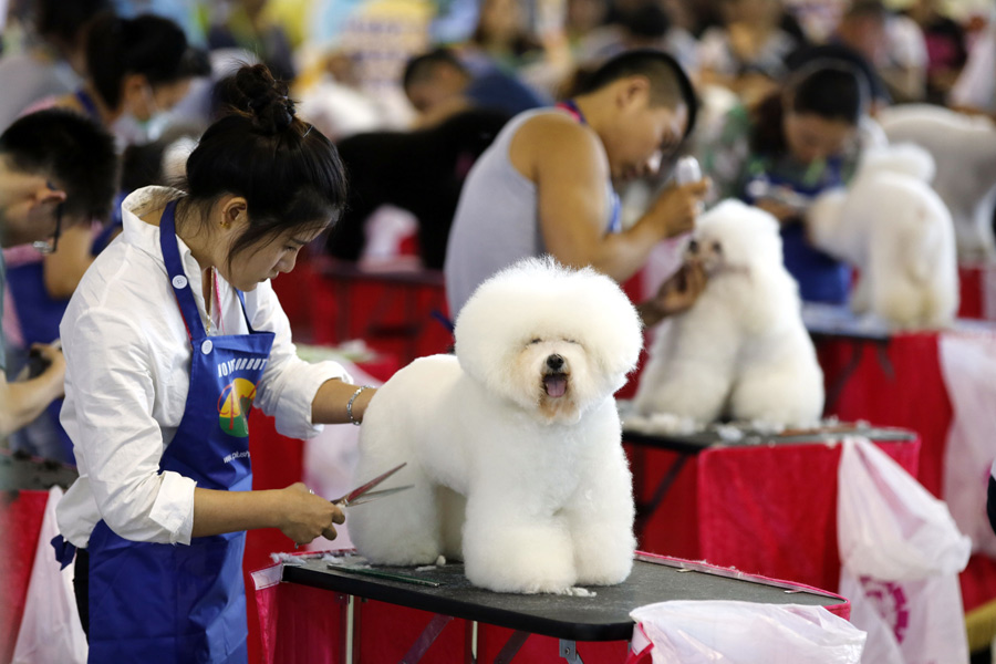 Animali domestici in crescita in Cina